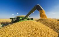 Kukoricából 7 tonna átlaghozamra számítanak a zalai gazdák