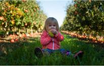 Minden napra egy alma, avagy miért ez a leghasznosabb gyümölcsünk