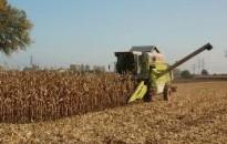 A kukorica 97 százalékát betakarították Zala megyében