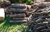 Adatbázissal segíti a tűzifát vásárlókat a Nébih