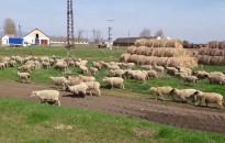 Mintegy 63 milliárd forint keretösszeggel jelentetett meg vidékfejlesztési pályázatokat az agrártárca