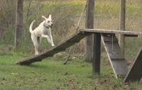 Elkezdődött a négylábúak oktatása a kutyaiskolákban