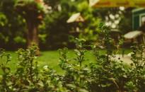 A kerttulajdonosok csaknem 60 százaléka tervez komolyabb felújítást