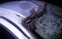 Szarvas ugrott autó elé, a kocsi utasa megsérült
