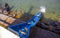 Uniós oltalomban részesült a Balatoni hal