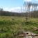 Versenytárgyalás – Húsz hektárnyi erdőt értékesít az önkormányzat