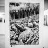Fekete-fehér, fotó: Gergely Szilárd