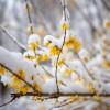 Havas tavasz, fotó: Gergely Szilárd