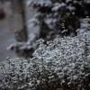 Tél a tavaszban Nagykanizsán, fotó: Gergely Szilárd