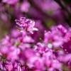 Virágözön Anyák napjára, fotó: Gergely Szilárd