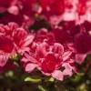 Budafai arborétum tavasszal, fotó: Czigóth Sándor